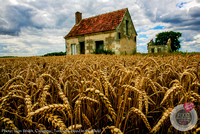 2nd_ron_smith_french_wheat-crop-