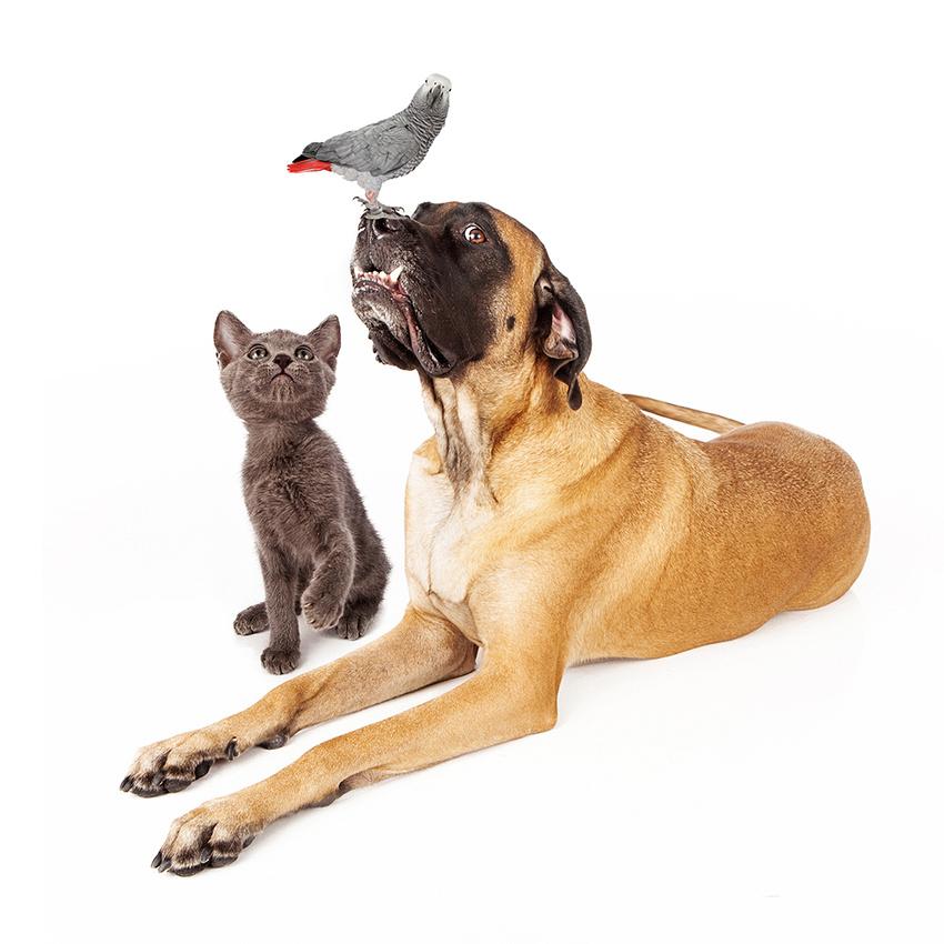 sschmitz-mastiff-kitten-bird
