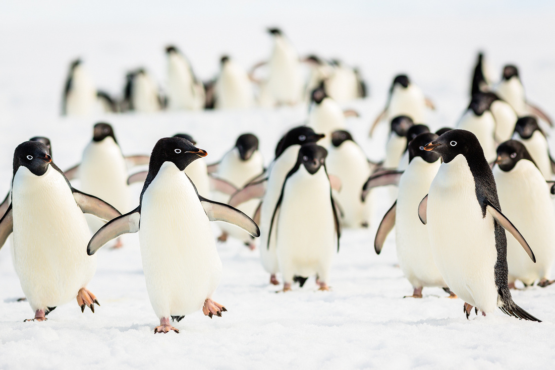 apeacock_antarctica_131219-2428